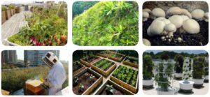 Agriculture urbaine 1